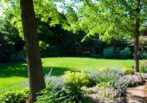 Grass Clippings - Good or Bad - sunny area