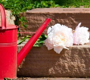 Spring Clean Up for Lawns and Gardens - watering can