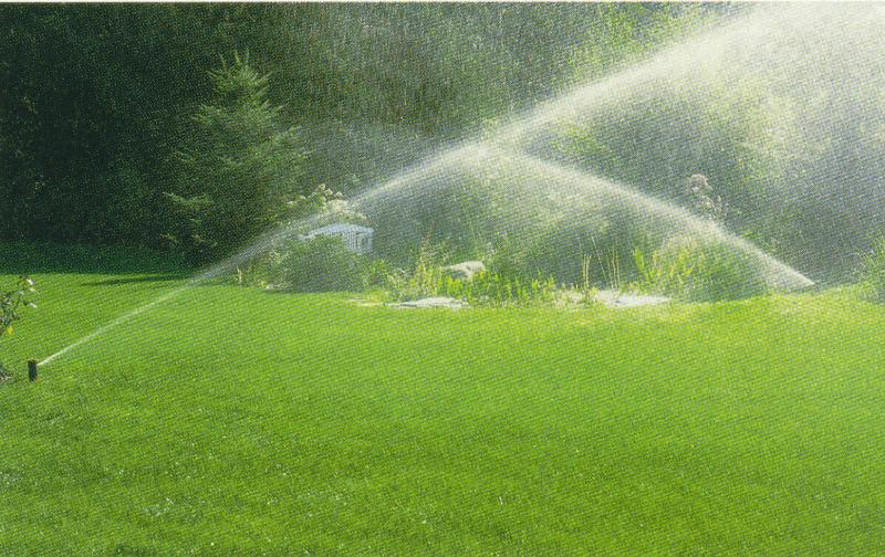 Keeping Plants Healthy in the Heat - sprinklers water a lawn