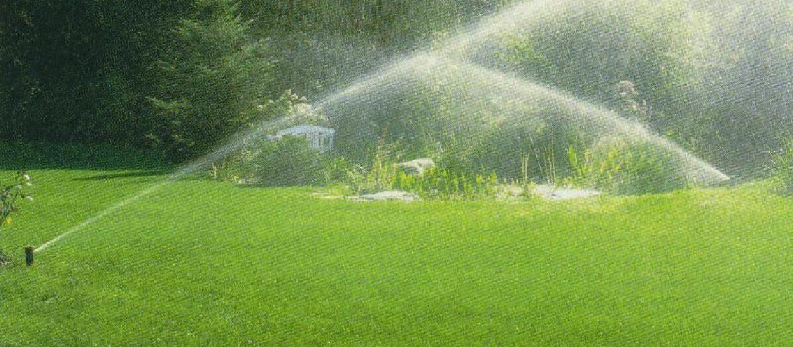 Keeping Plants Healthy in the Heat - sprinklers water a lawn