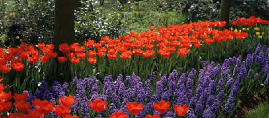 Plan Your Garden for Spring - red and purple flowers